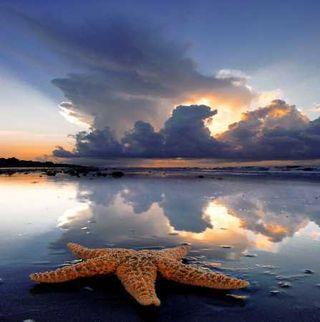 Starfish_1