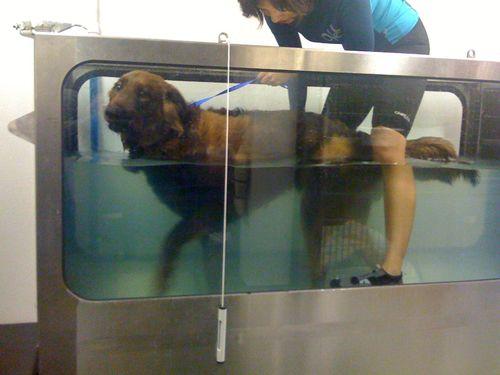 Moose in tank