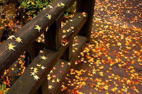 Leaves on Japanese Bridge 11-01