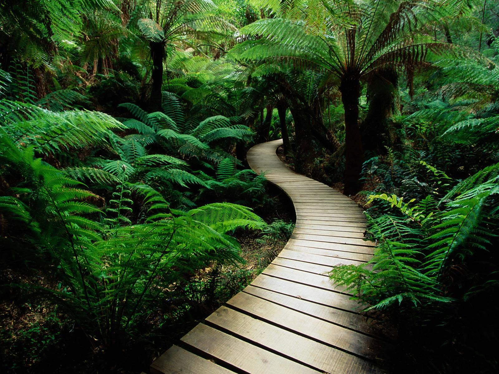 Nature-walk-trail