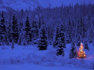 Blue-forest-christmas-tree